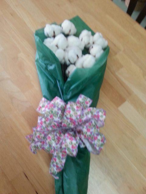 Long stem cotton bolls